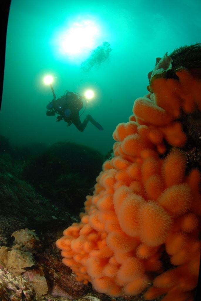 Dykking fra Ballstad