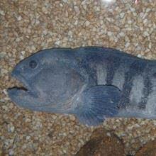 Drøbak Aquarium