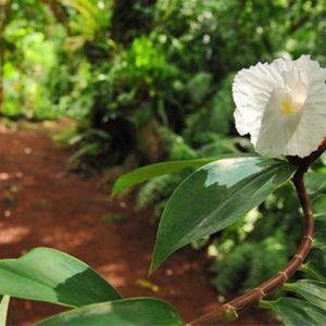 Jardins des Parfums & des Epices - Visites Patrimoine