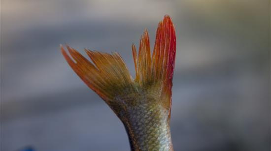 Fiska i Bäcksjön