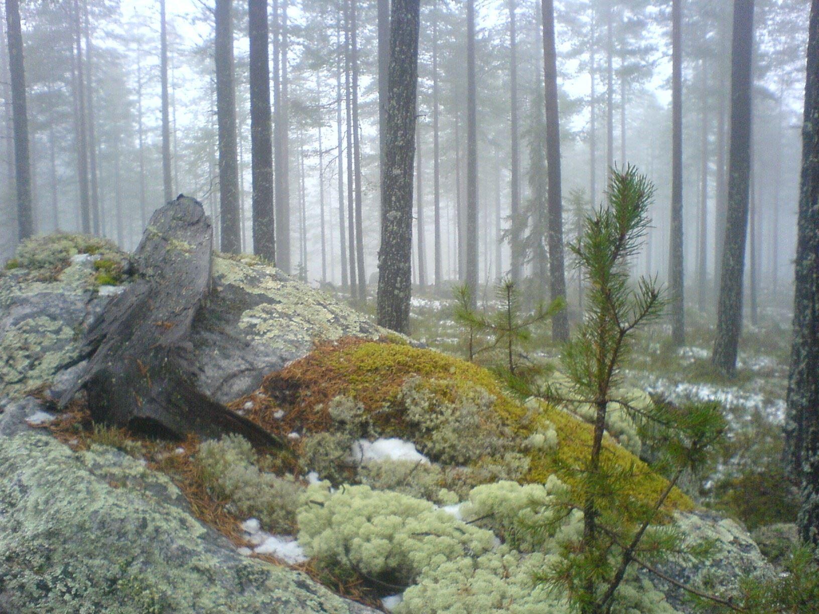 Björnexkursion i vildmarken - guidade turer, Orsa Finnmark