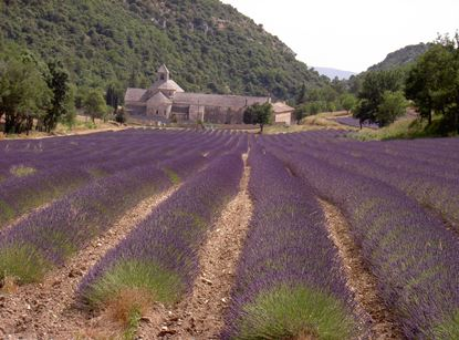 LAVENDER & VILLAGES IN LUBERON