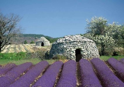 LAVENDER TOUR FULL DAY