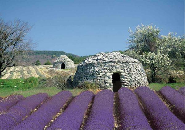 Excursion LAVENDER TOUR JOURNÉE - A la Française ! Provence