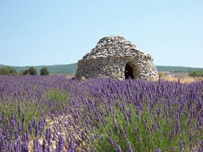 lavender tour morning Luberon