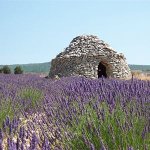 Excursion Lavender tour matin Luberon