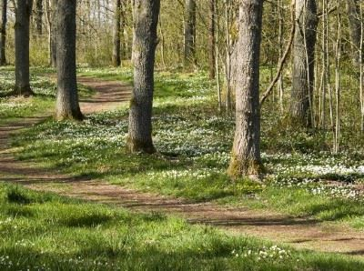 Jogging track, Olofstrom