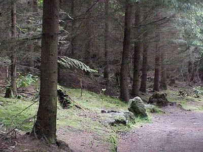 Kyrkhults motionsslinga 2,5 km