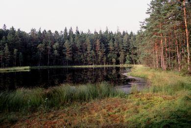 Nyteboda Forest 3 km, Olofstroem