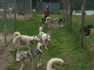 Visit the kennel at Aurora Borealis