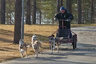 © Aurora Borealis Adventure, Hundspann på hjul