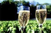 Gourmet Tour: Vineyards