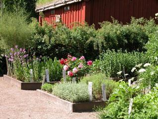 © Älmhults kommuns bildbank, örtagården, Linnés Råshult