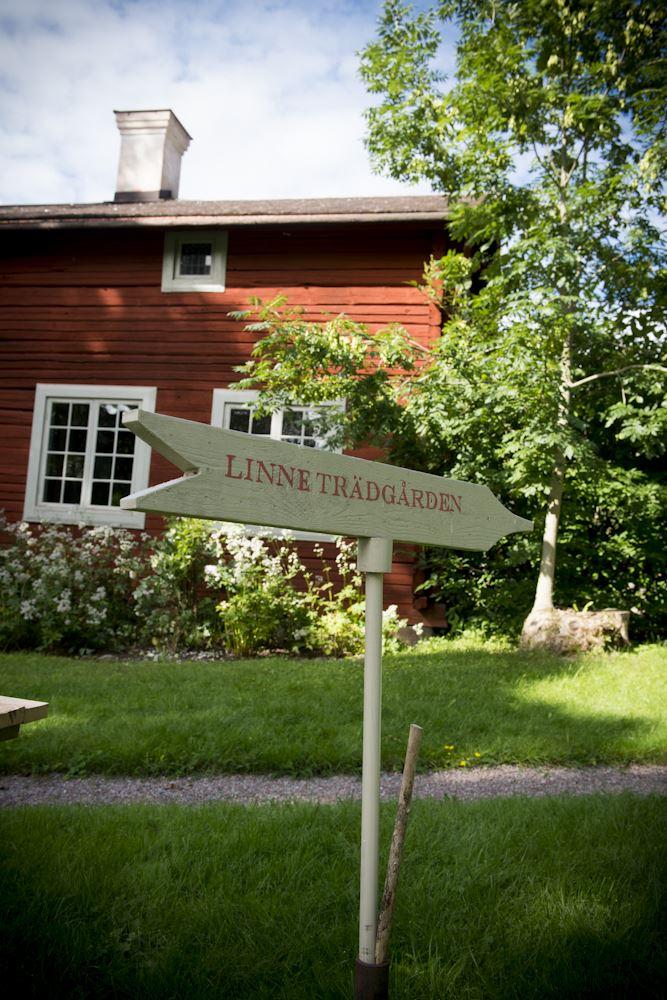 Jonas Lindgren, Linnés bröllopsstuga