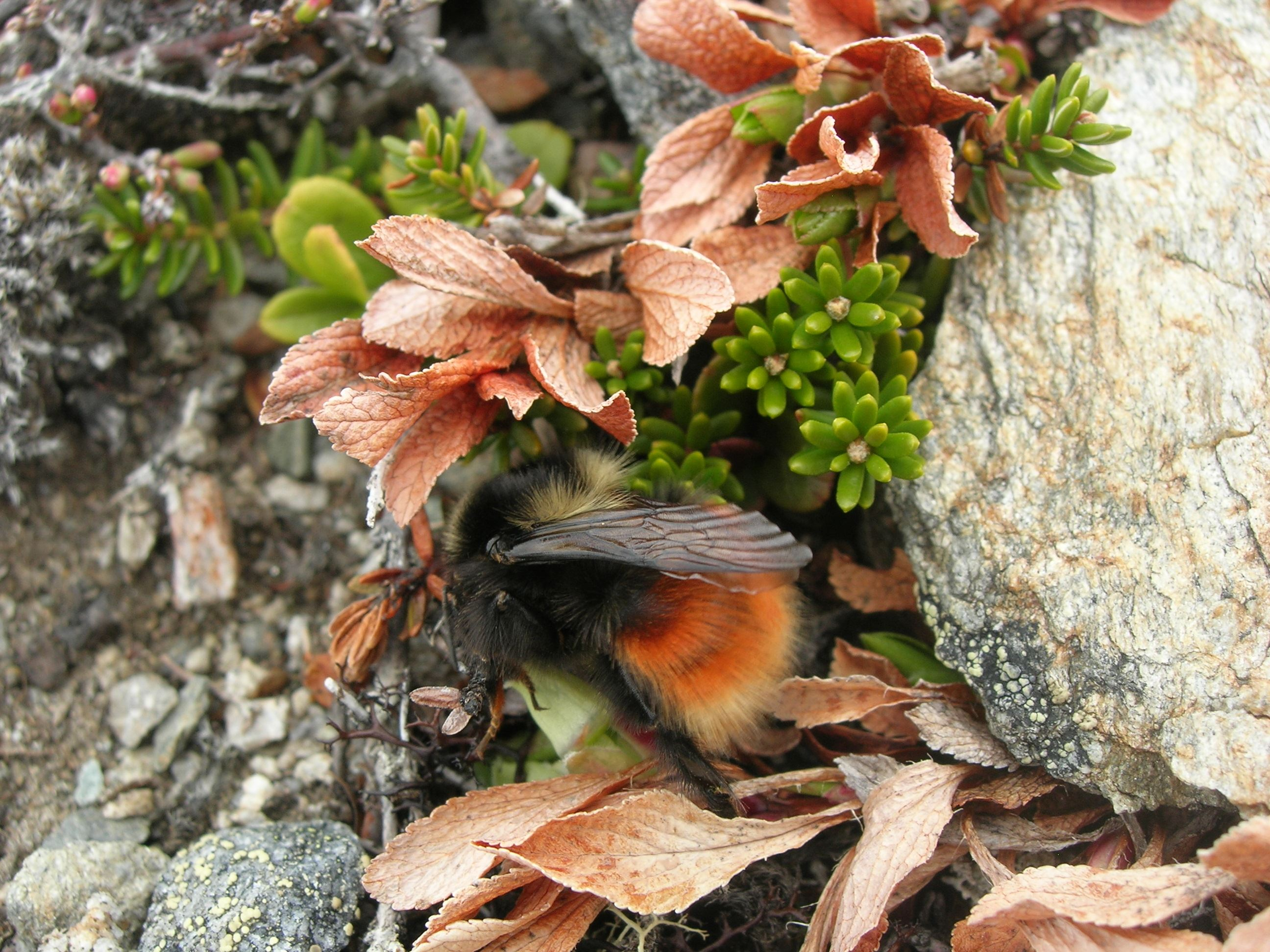 Guided family tour among bumblebees and plants