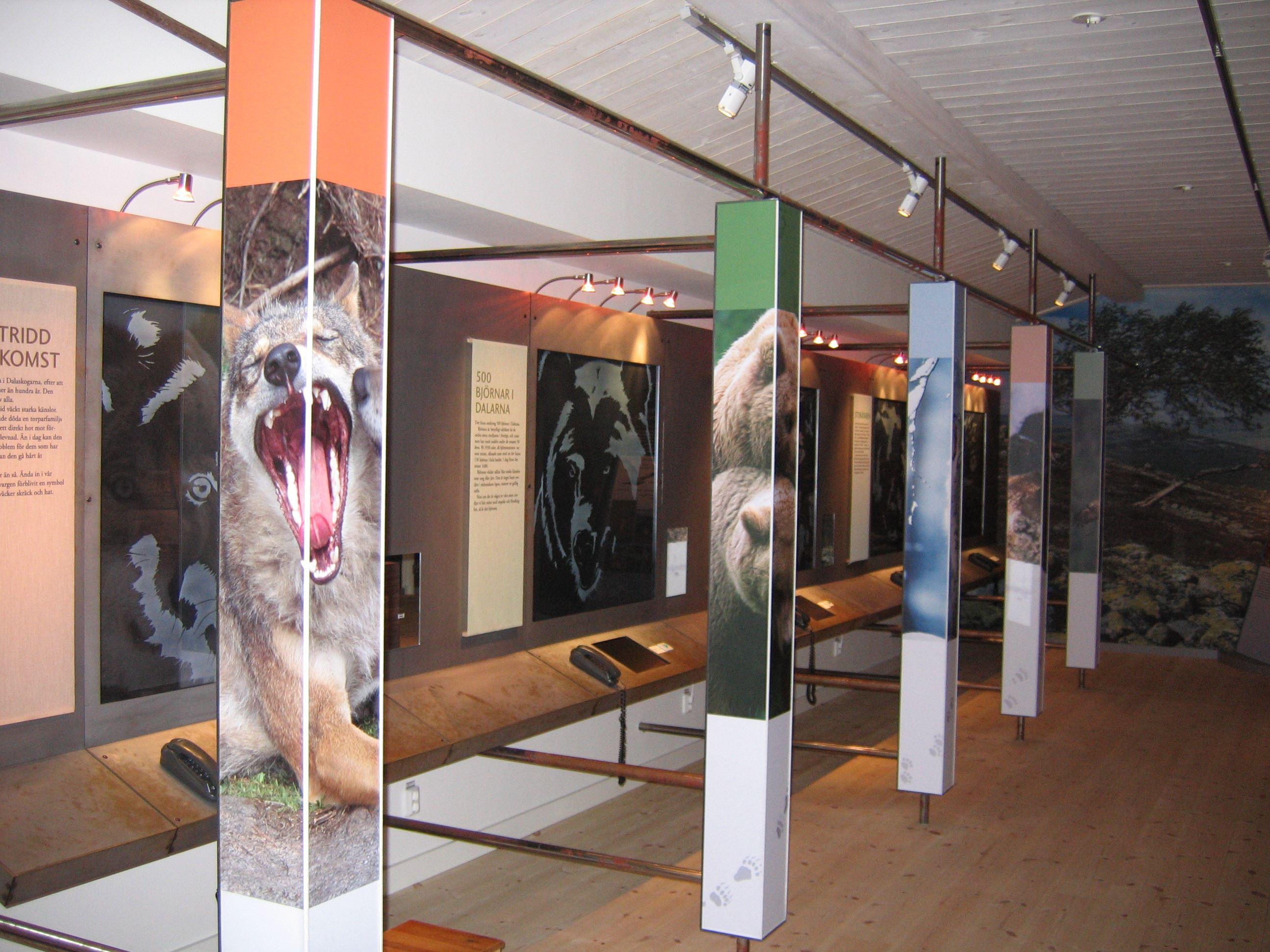 Visning av rovdjursutställningen