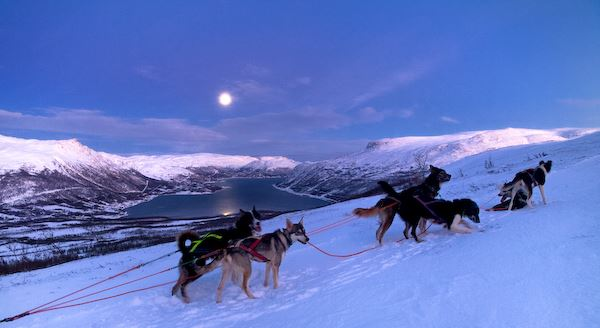DOG-SLEDDING IN THE COUNTRYSIDE