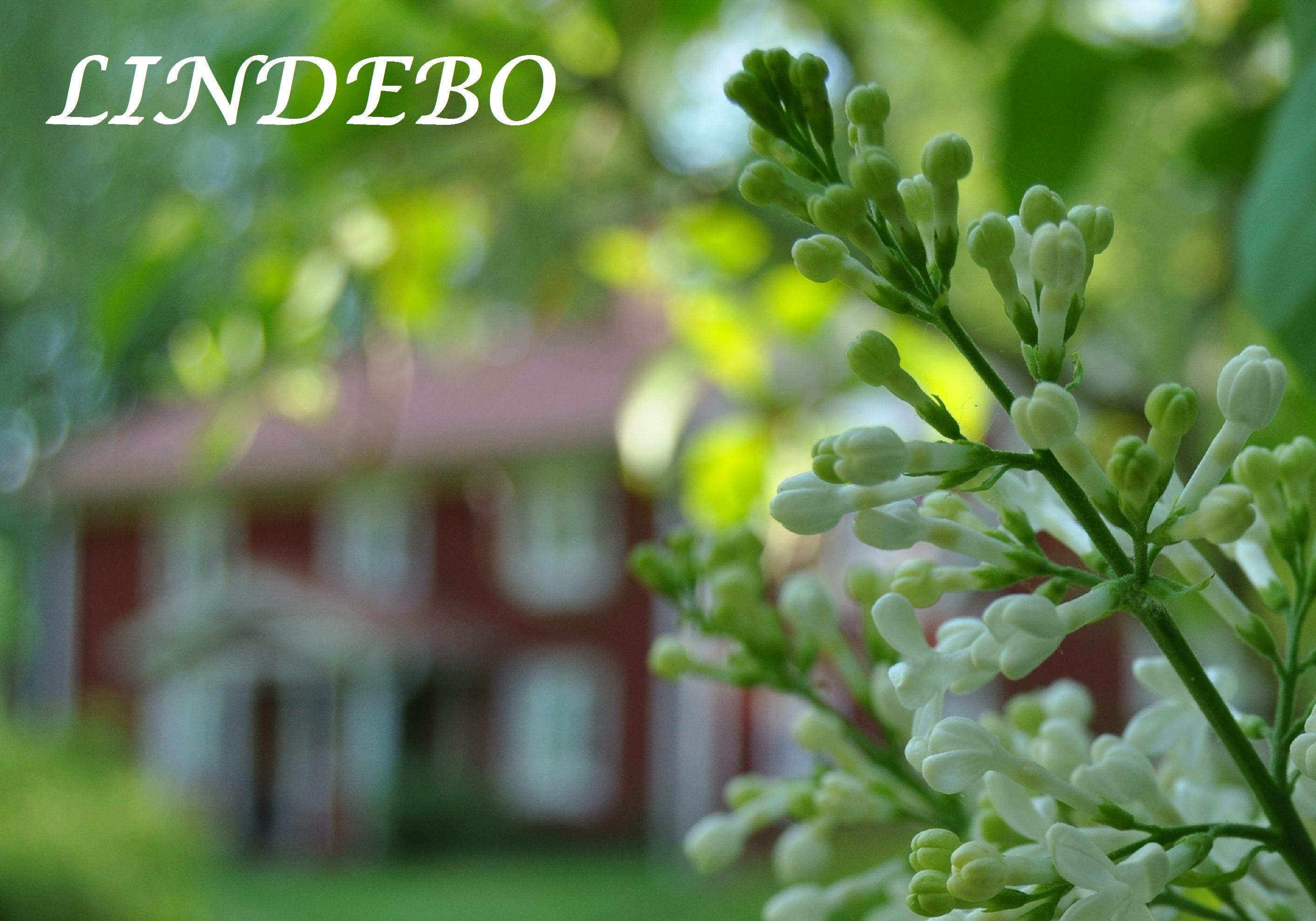 Lindebo Holiday home agency