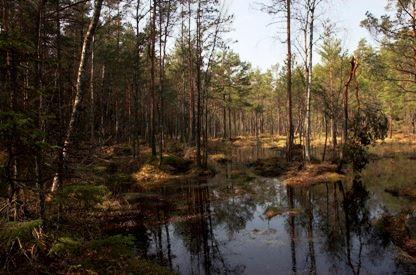 Länsstyrelsen Kalmar Län, Strömby nature reserve