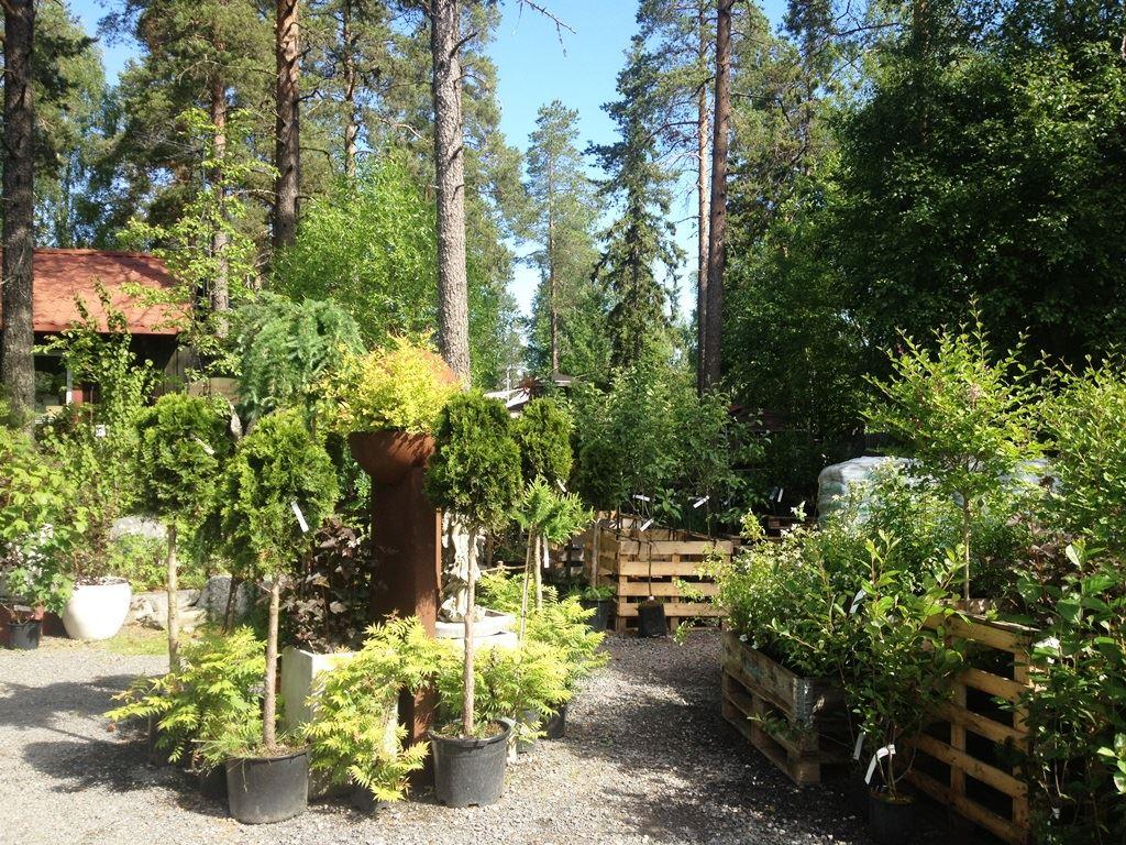 Smultronstället garden and café