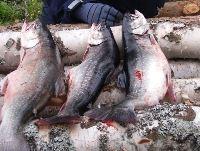 B-O. E., Gnarps Fiskevårdsområde