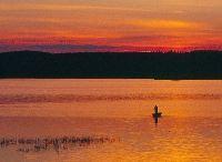 Alfta Fiskevårdsförening