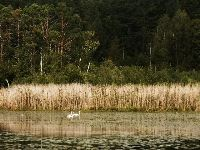 Lake Lugnesjön Natural Preserve