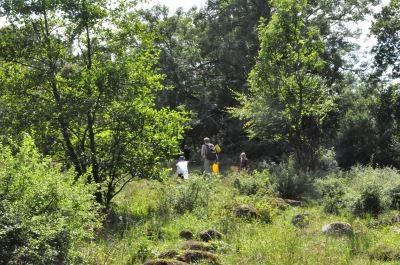 Djurrödsbäckens dalgång - naturreservat