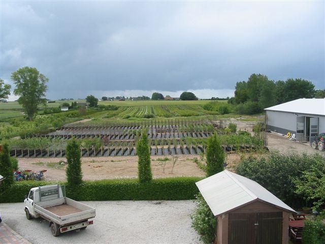 Henriette Ellber, Wallströms Plantskola