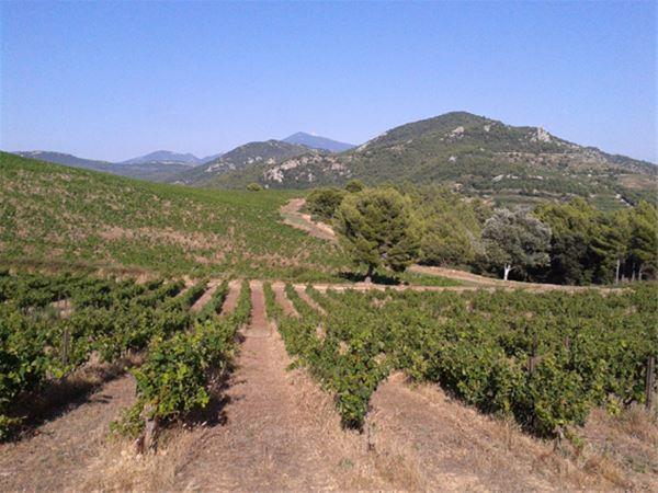 Initiation aux techniques de dégustation - A la Française ! Provence