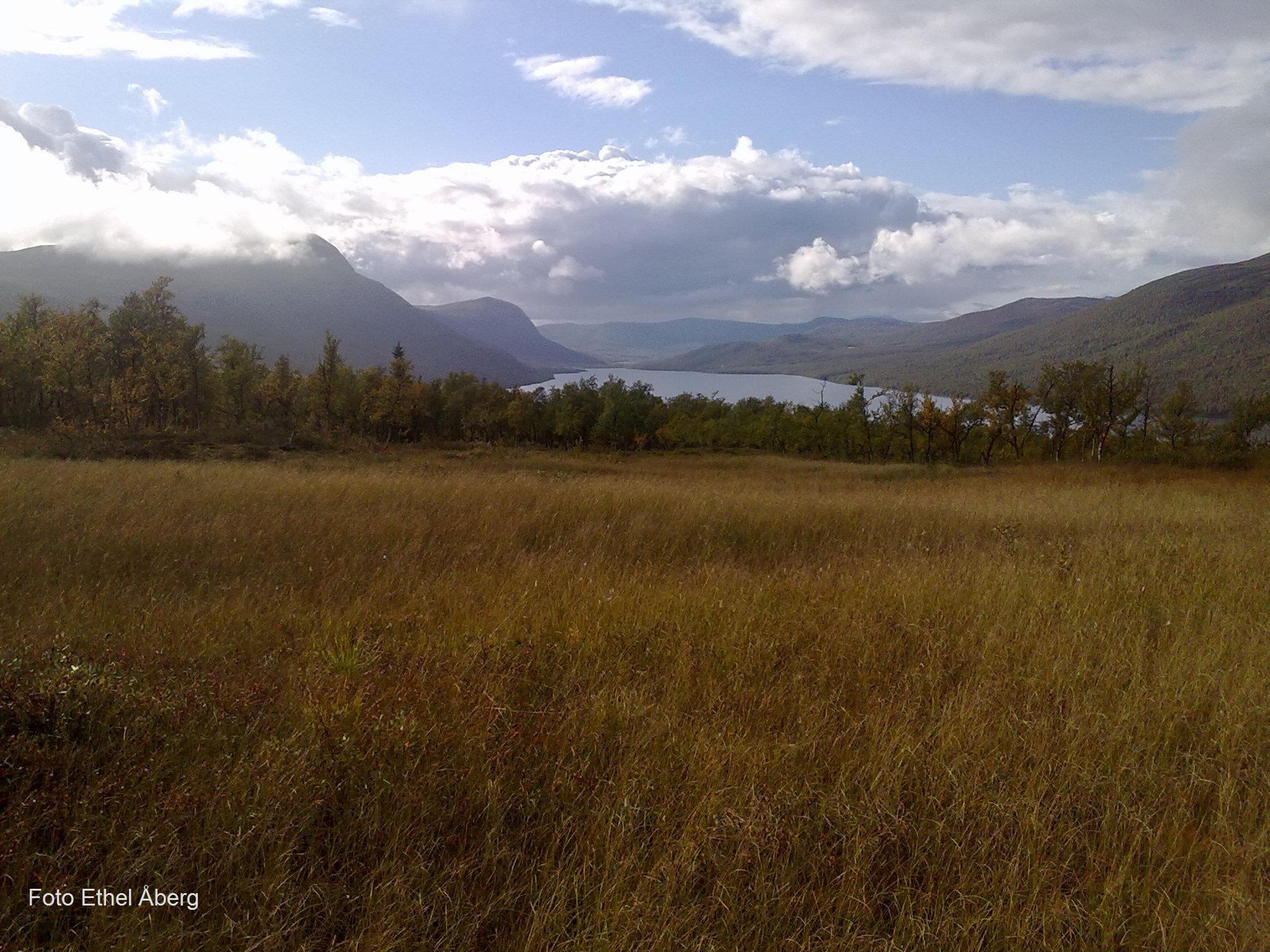 Vandra i Ammarnäs - guidade turer