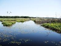 Ålsjön natural preserve