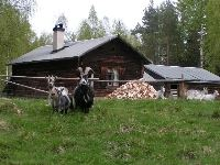 Näsvall Fäbodvall