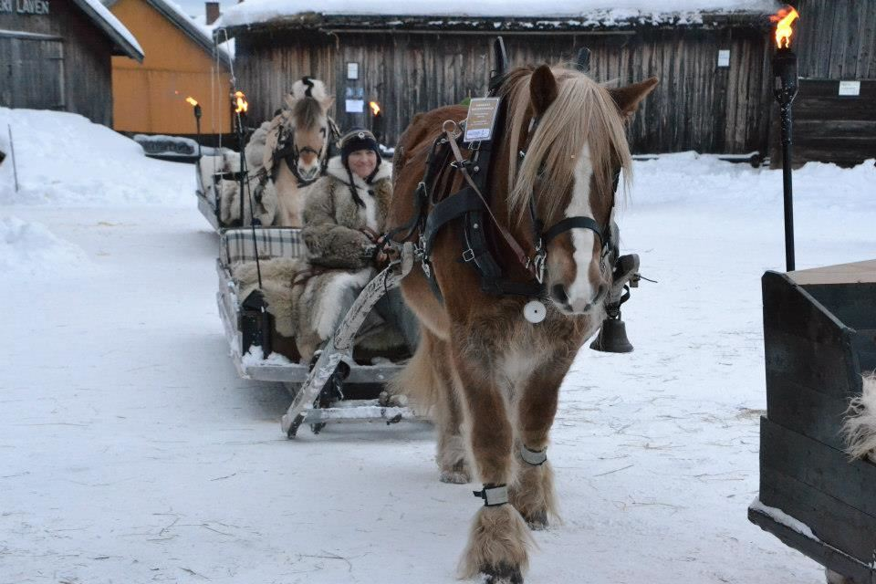 Horse sleigh rides / Horse and carriage