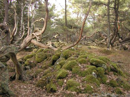 Nature reserves on Öland