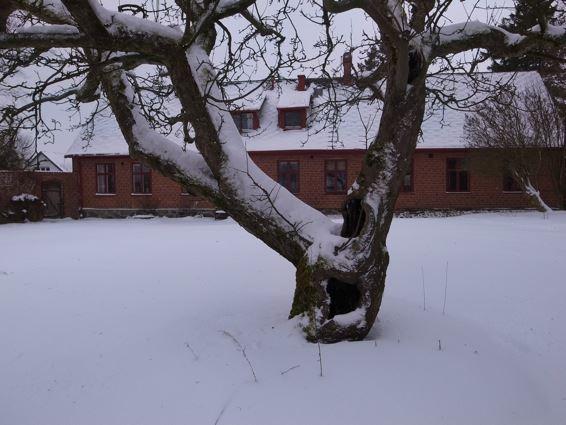 Kölleröds gamla skola