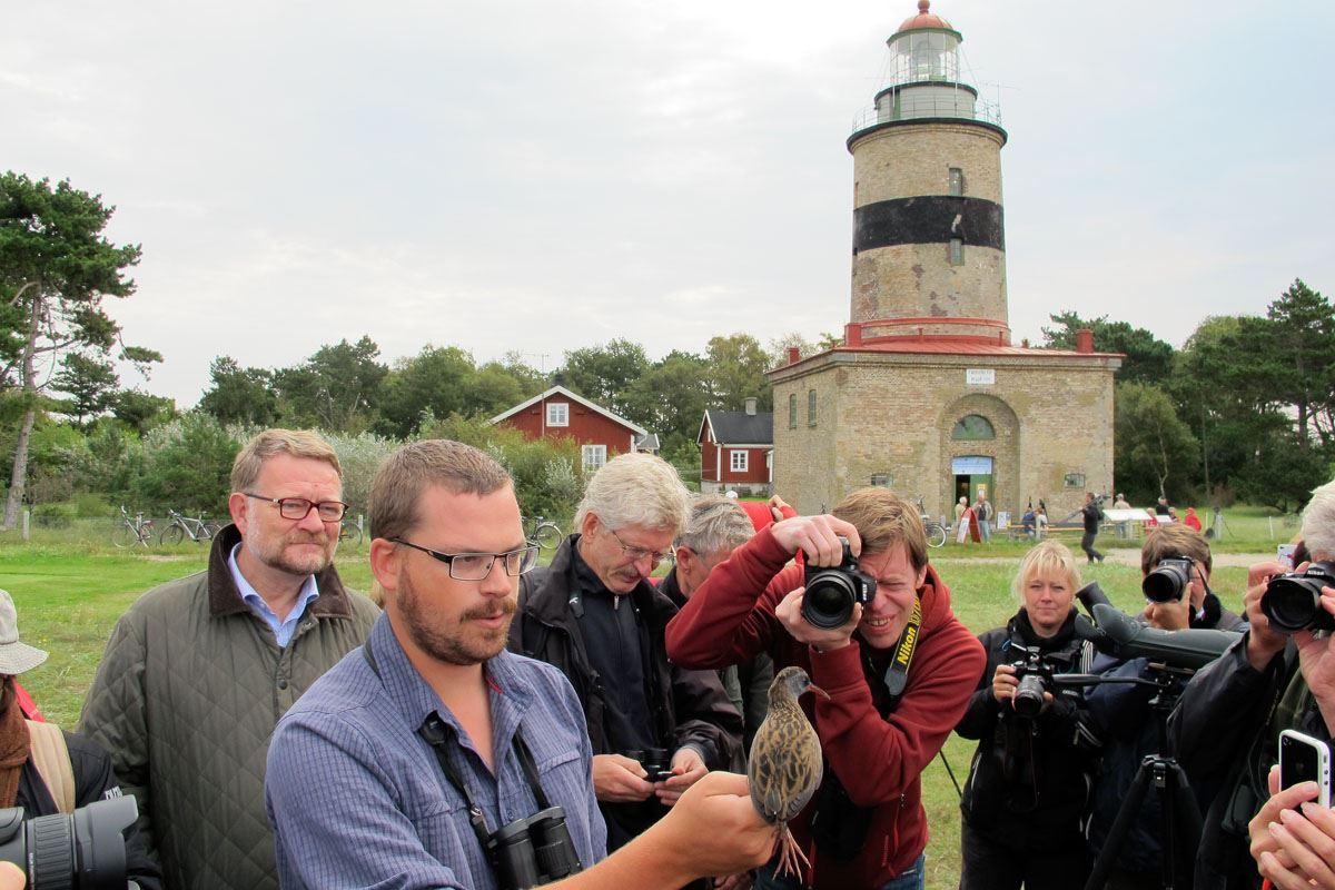 Falsterbo Fågelstation