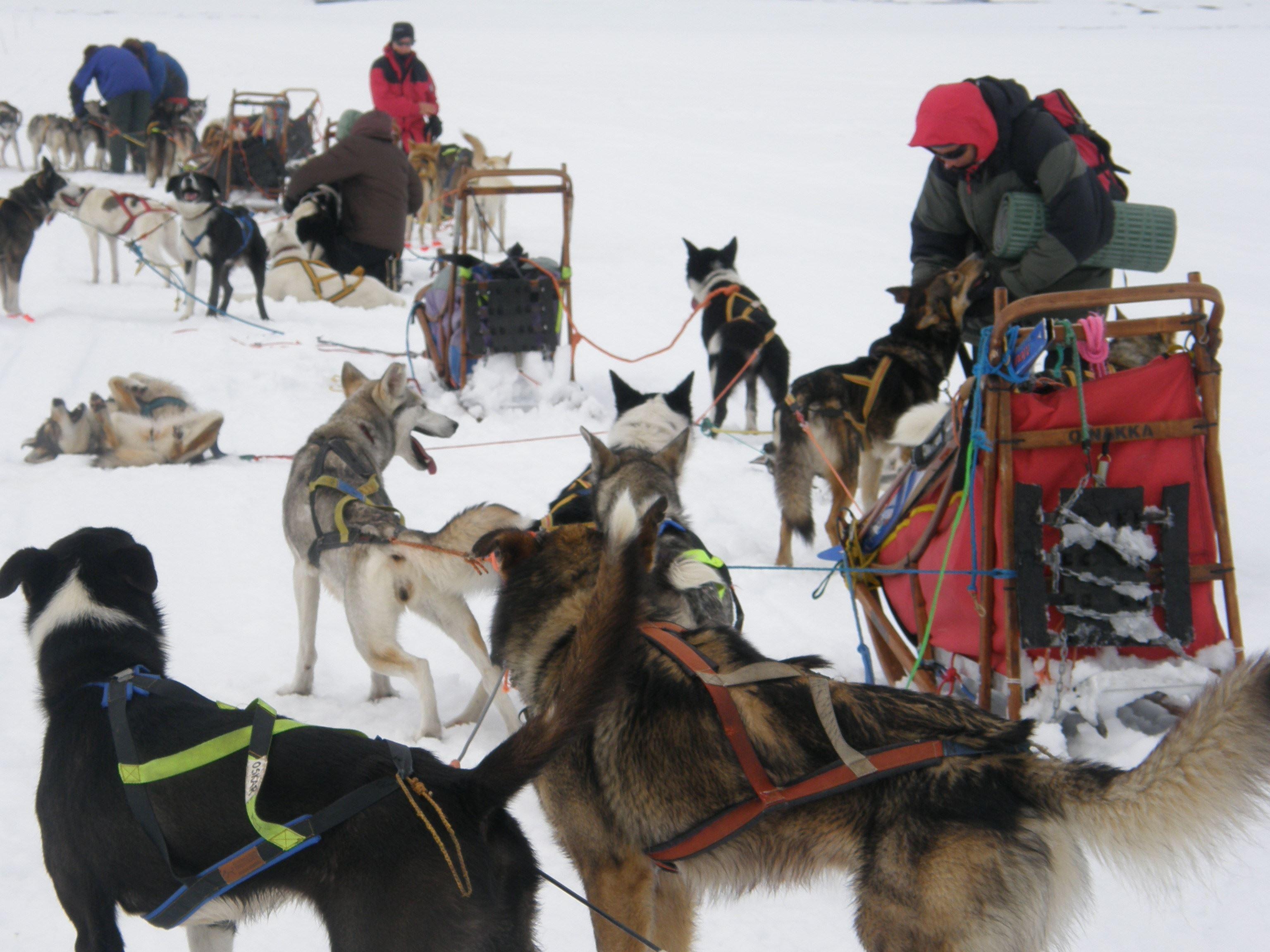 Ski and dogsled