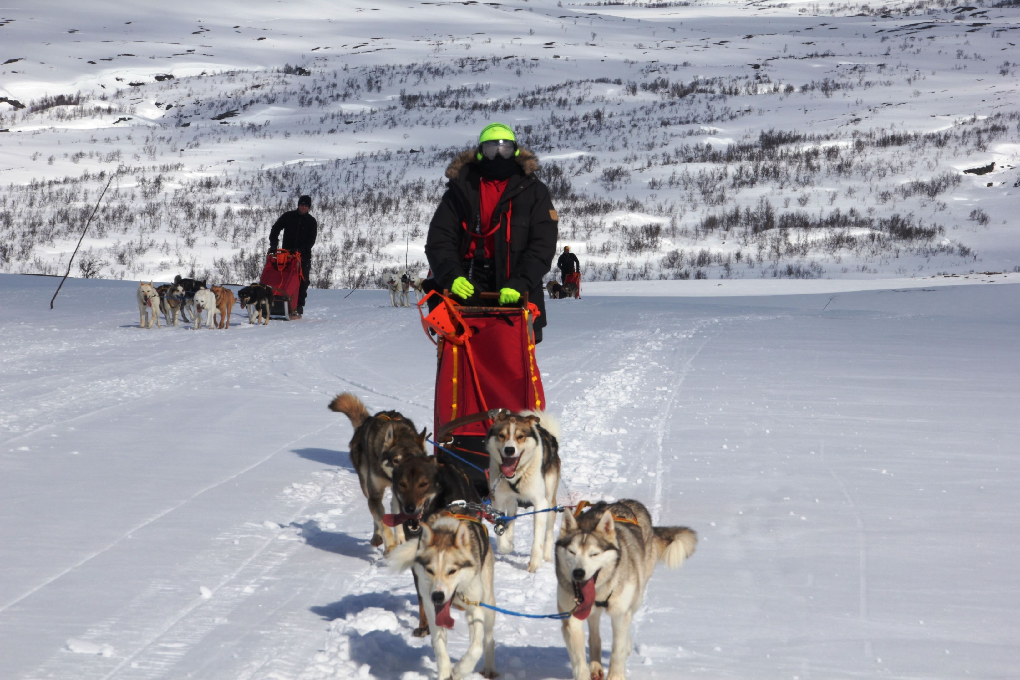 One Day of Active Dog Sledding – Active Tromsø
