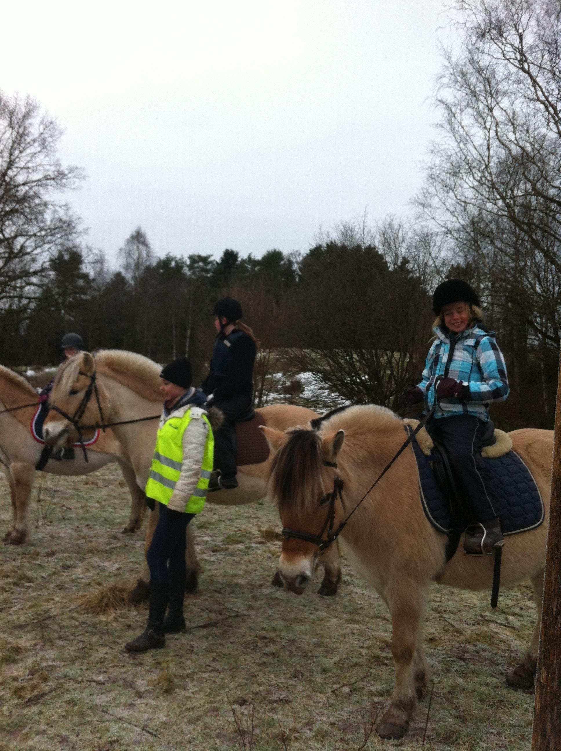 Grönturen's Norwegian ponies