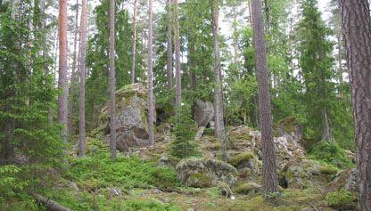Henrik Gustafsson, Naturreservat Mässeberg - Åker