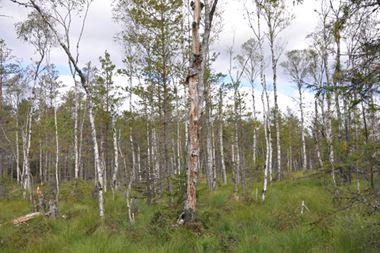 Annika Lindvall, Naturreservat Tjurhults mosse - Ekeryd