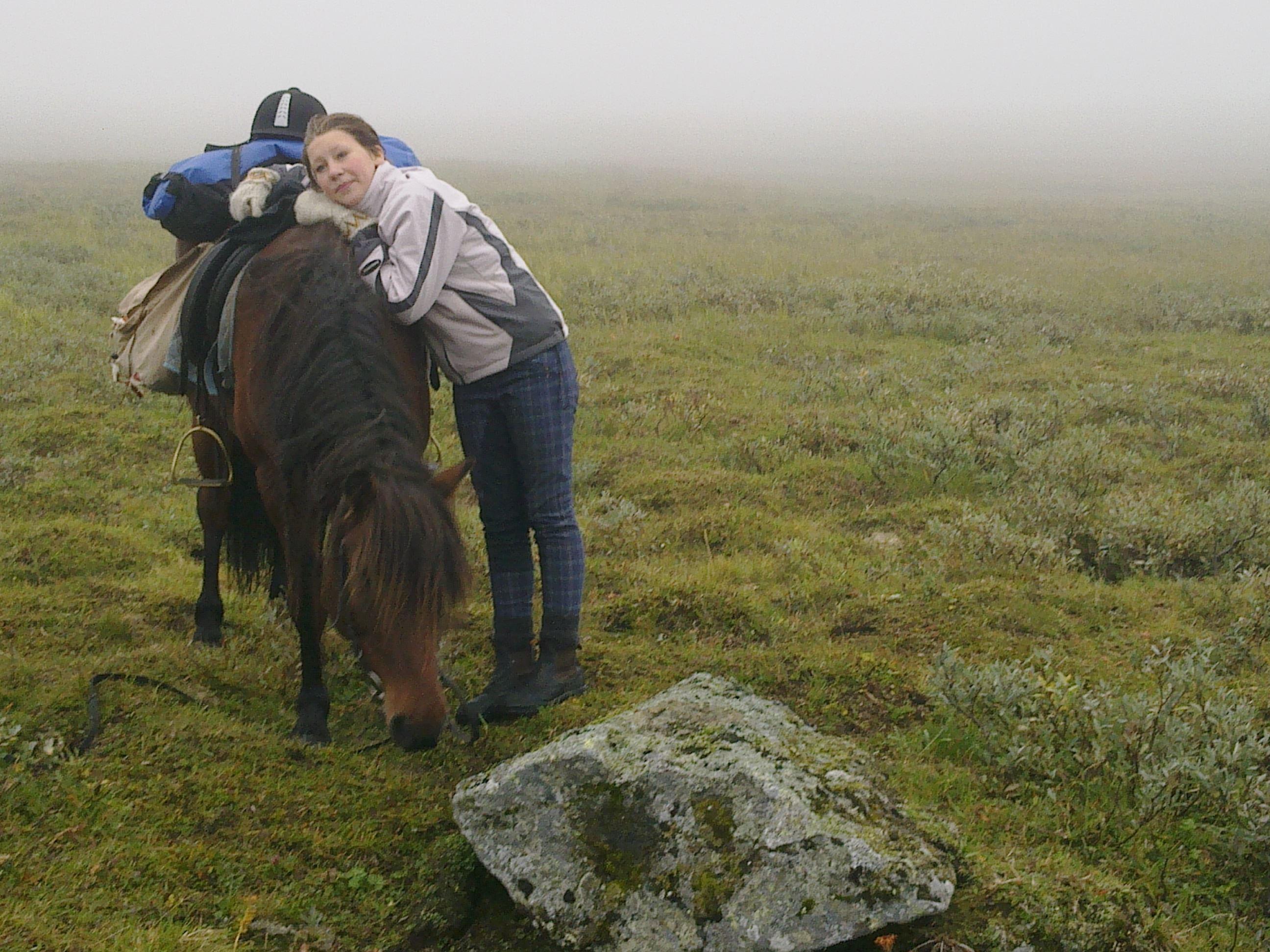 Ammarnäsfjällens Islandshästar