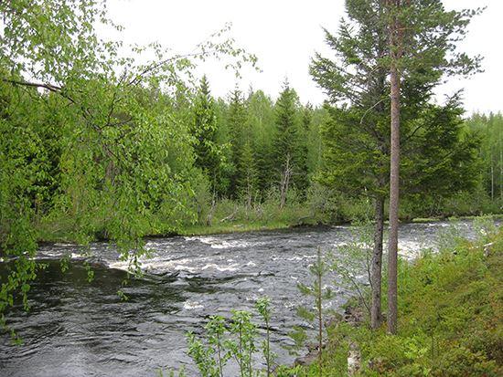 Magnus Hansson, Flottarstigen