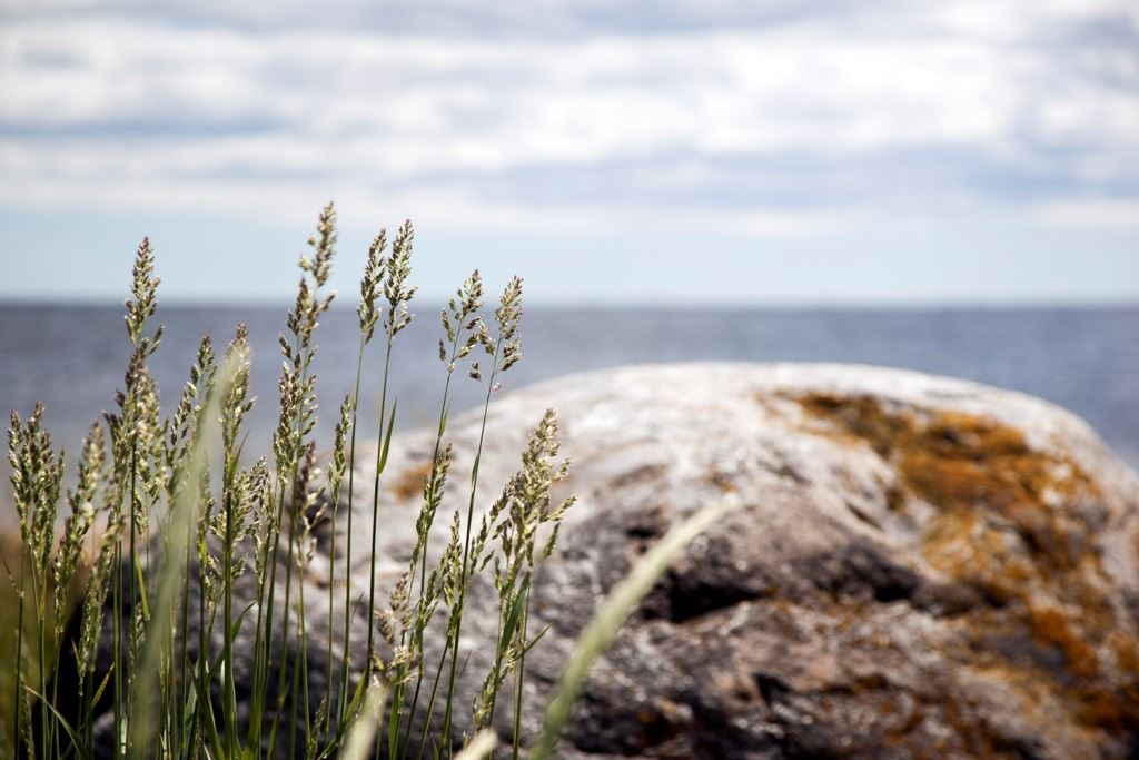 Kustleden - The Coastal Trail