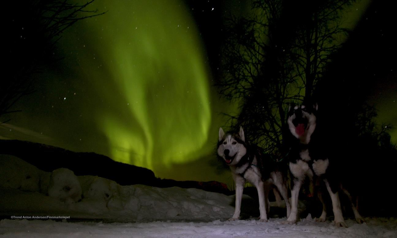 Dogsledding and Northern Lights