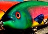 Umeafishing