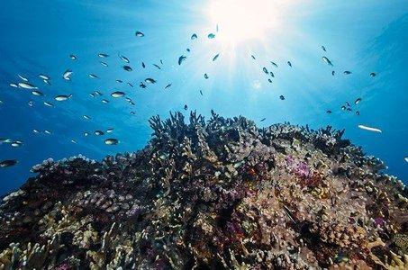 Plongée Australe