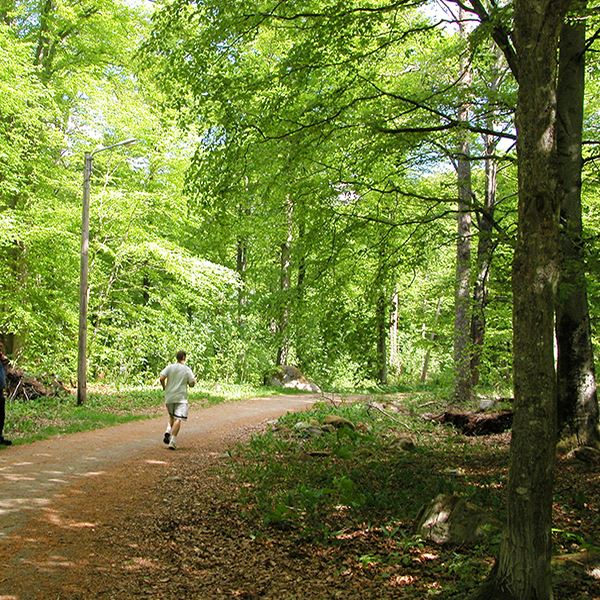 Jogging tracks in Älmhult