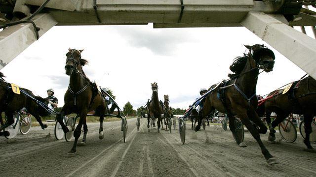 The Baltic Festival - Trotting race